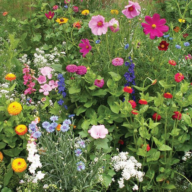 English Garden Seed Mat Hartmanns Plant Company