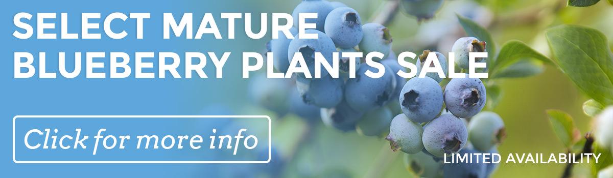 Hartmann's Plant Company Mature Plant Sale
